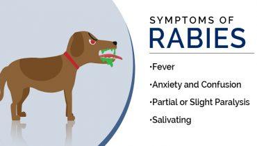 Symptoms_of_Rabies